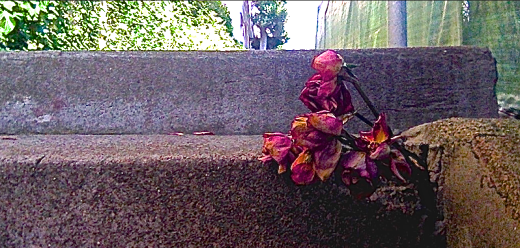 cropped-Walking-Cement-Flower.png